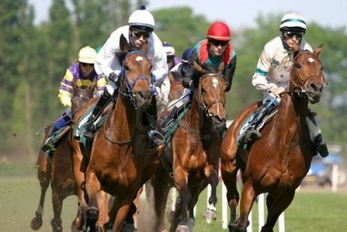 caballos-de-carreras-6953